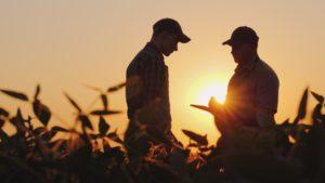 Segurado Rural tem direito ao Auxílio-Acidente